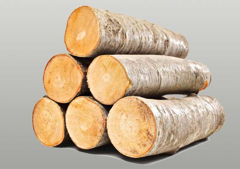 Sauna Holzarten für innen und außen